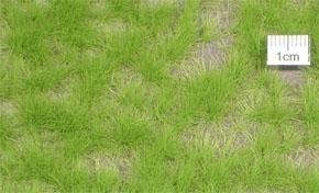 Grasbüschel lang 1:45+ Frühling